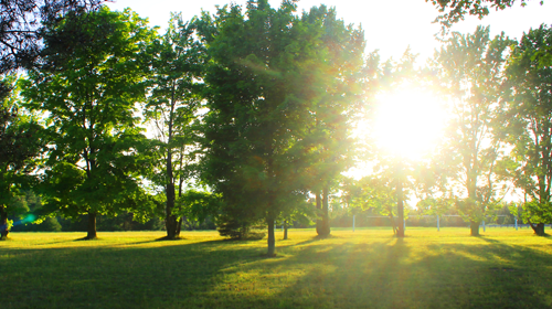 Lake Ann Camp