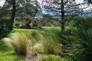 The grass garden on a summer's day