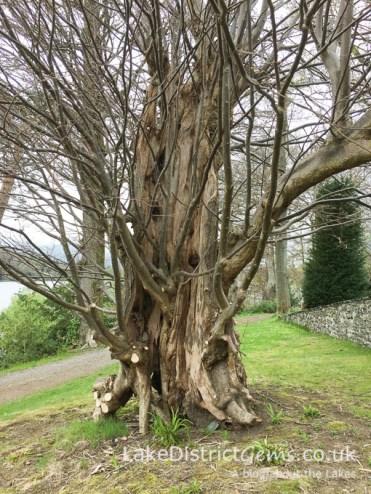 Tree on the island