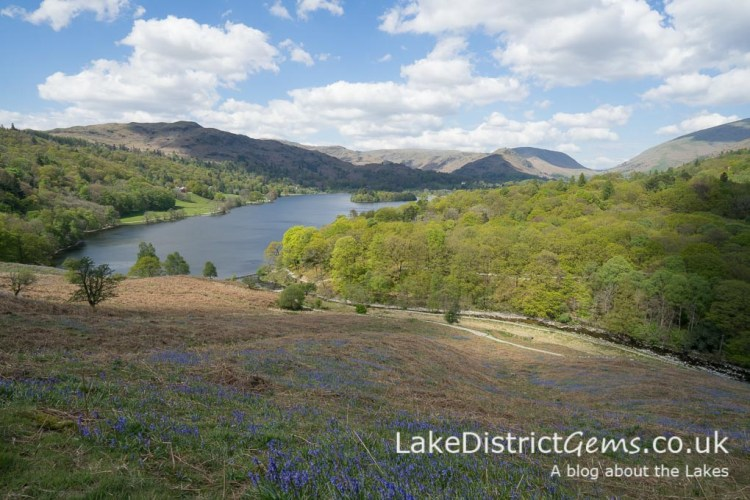 The bluebells from Loughrigg Terrace, overlooking Grasmere