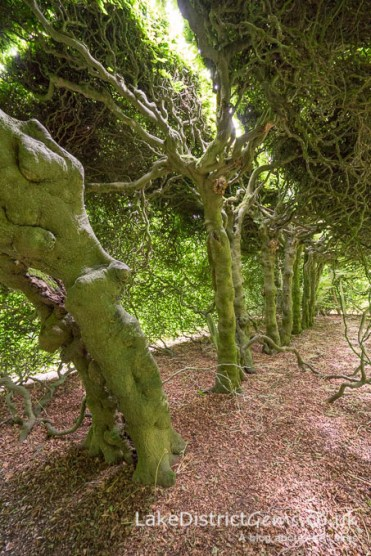 Peering underneath the hedges whilst passing through the archways