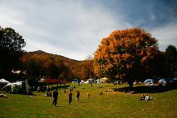 leaftreecy_jog