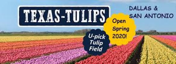 Image result for texas tulips san antonio""