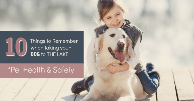 10 Things to Remember when taking your Dog to the Lake (Pet Health & Safety)