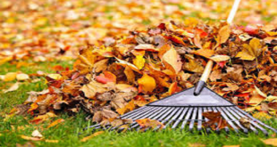 Fall clean up begins in Vermilion