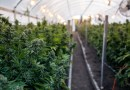 M.D. of Bonnyville passes bylaw for any future cannabis facility