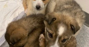 Elk Point RCMP investigate abandoned puppies on Frog Lake First Nations