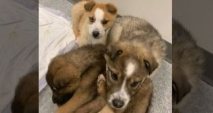 Abandoned puppies given second chance by the Bonnyville and District SPCA