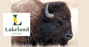 Half ready to roll out bison courses at Lakeland College in Vermilion