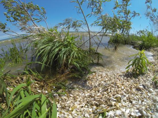 Littoral zone, marshy, weedy shoreline