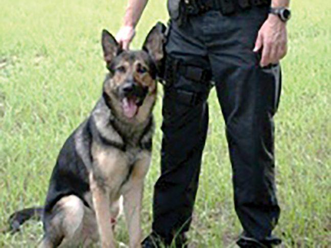 Dade City Police seeks new K-9 team