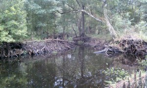 This is a portion of the Cypress Creek Watershed. A 2011 study by the Hillsborough County Public Works department shows the watershed has a history of flooding problems.