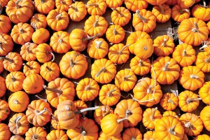 These gourds add a splash of Halloween color.