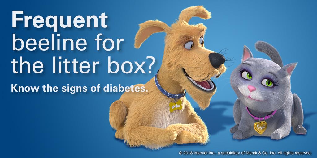 Pet Diabetes