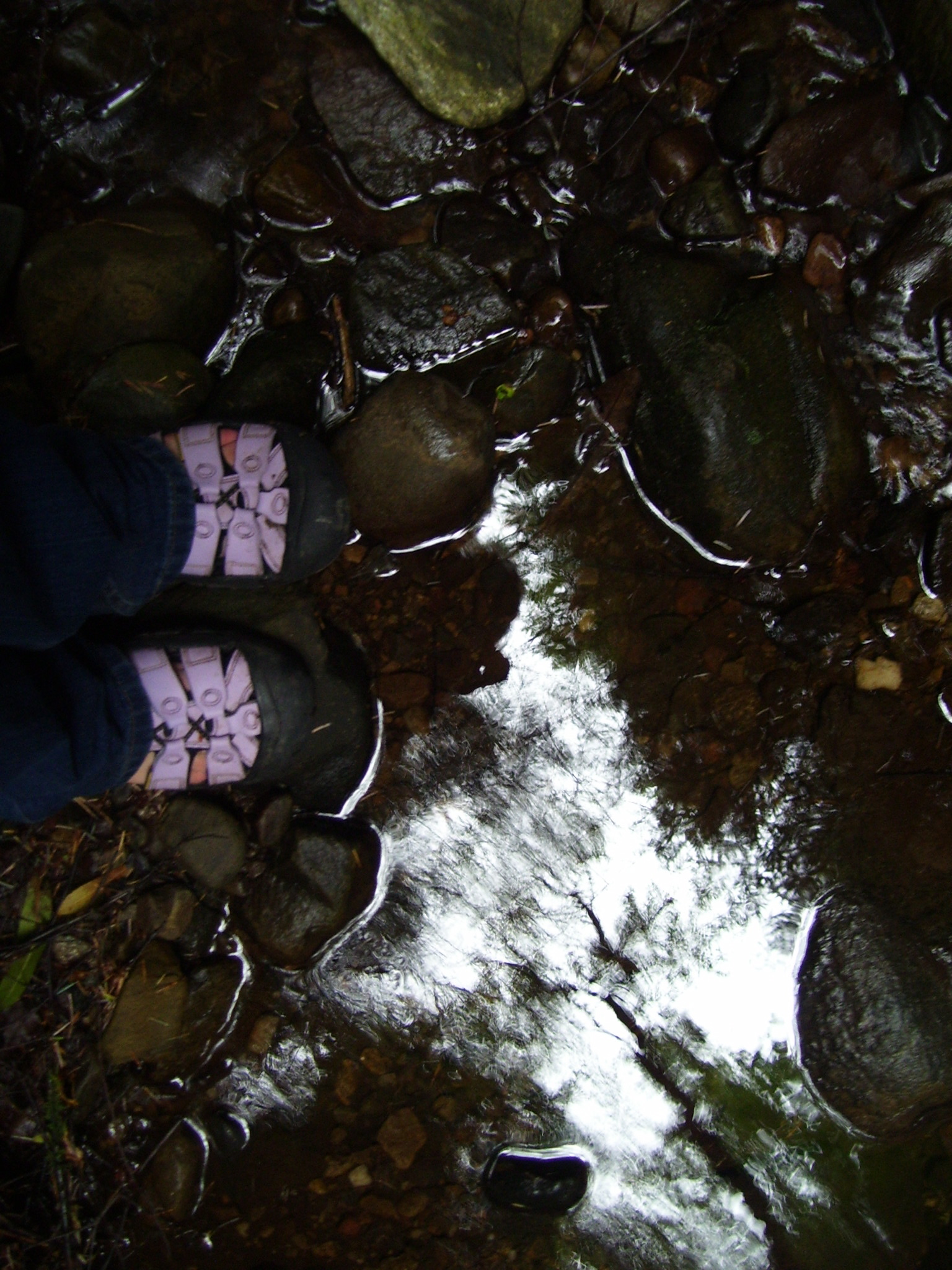 My purple-clad toes in a Narnia-esque forest