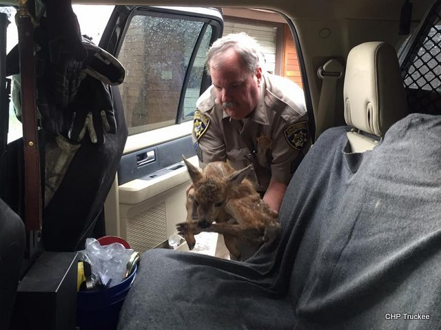 "CHP Truckee's Sgt. Fisher Rescued ""Star"" This Morning"