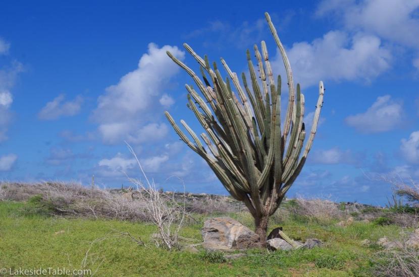 aruba-cactus-ceviche-recipe