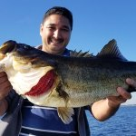 Orlando Fishing Monster Bass on Lake Toho in Central Florida