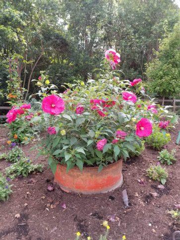 Garden photography by Suzy Renz