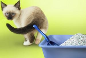 Чем кормить котенка при запоре