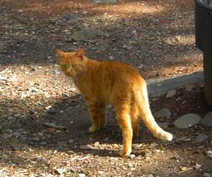 camp-cat