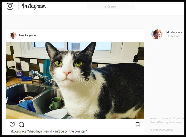 7 Ways Instagram helps authors find readers
