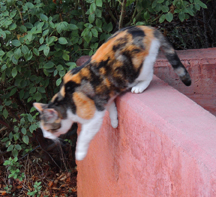 sedona cat on wall