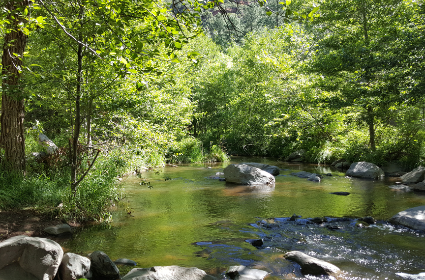 Picture of summer green water