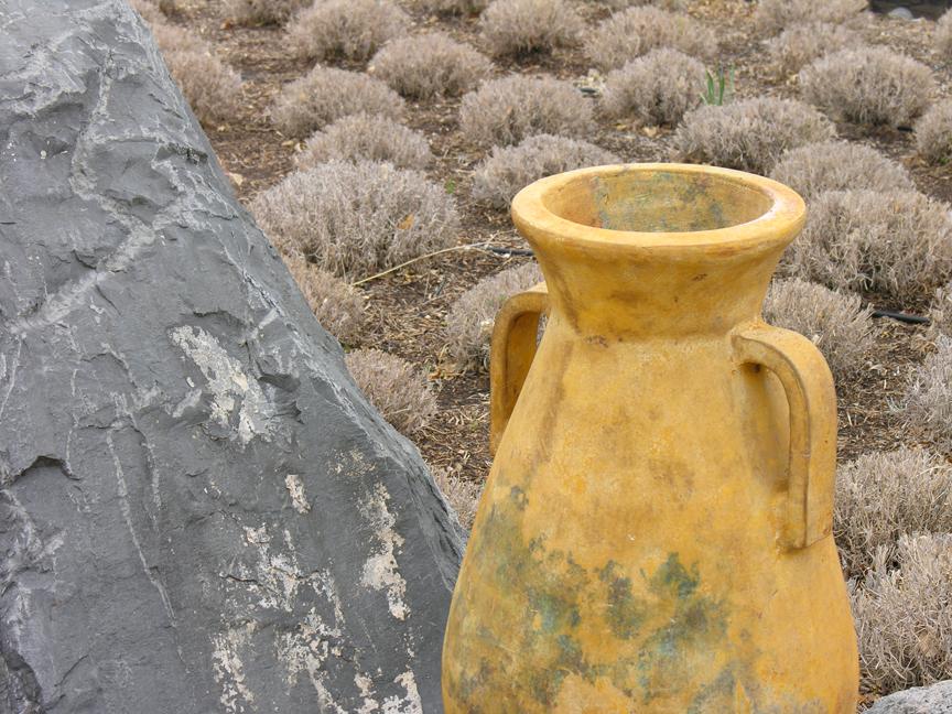 vase rock hedge