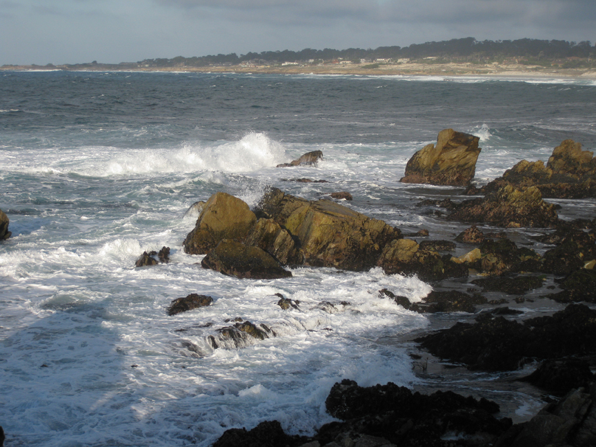 The ebb and flow of the sea–and life