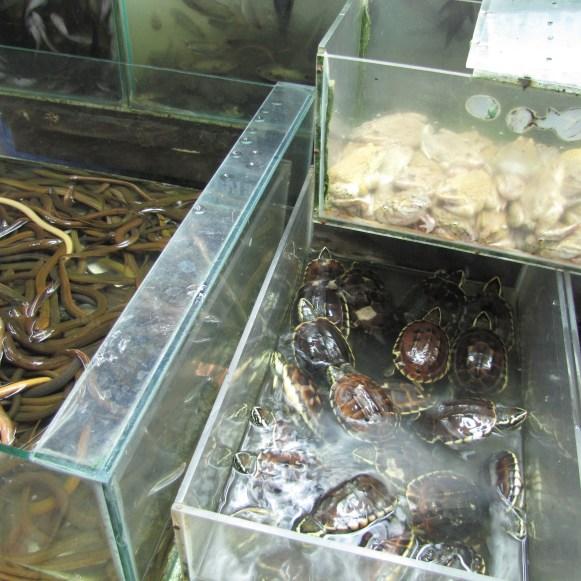 Змеи, лягушки, чрепахи на рынке