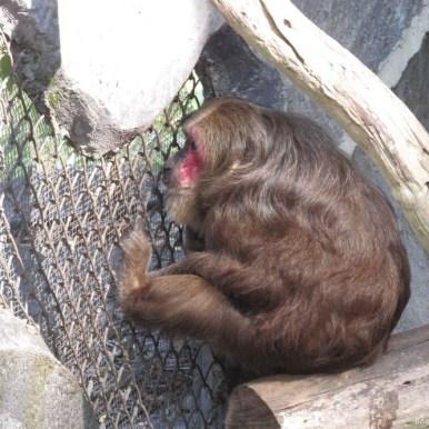 Зоопарк Кхао Кхео обезьяны