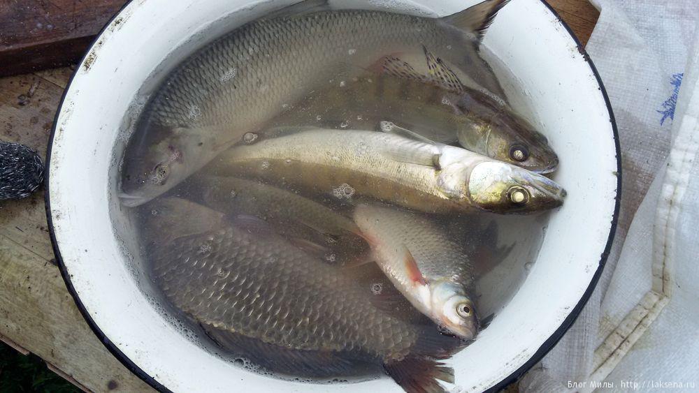 Лето в деревне фото рыба улов сообщение про рыб