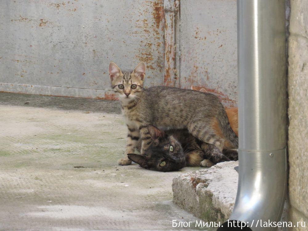 Кошки в Хорватии — фотоподборка