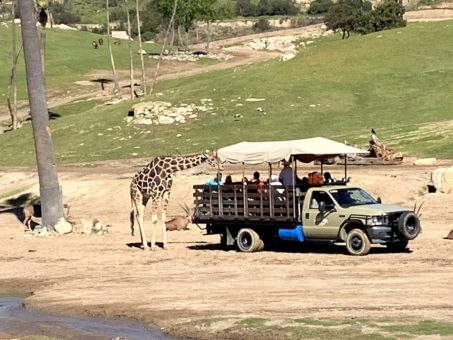 Caravan to feed giraffes
