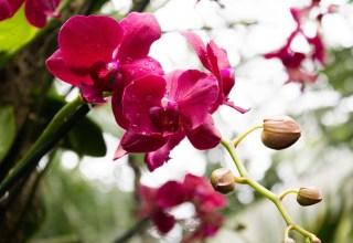 Орхидея Фаленопсис - уход в домашних условиях.