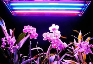 Как выбрать лампы для растений? Фитолампа своими руками.