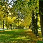 el otoño ha llegado a la ciudad