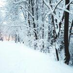 Postal de domingo – Nieve en Múnich