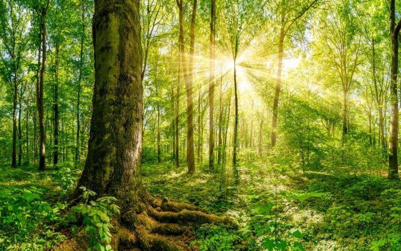 himachal pradesh forest