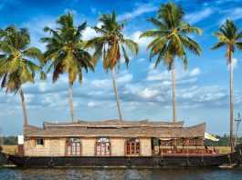 kerala coconut trees