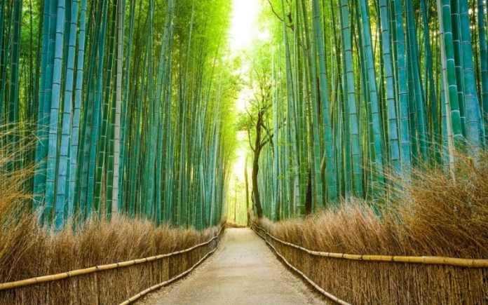 japan scenery forest
