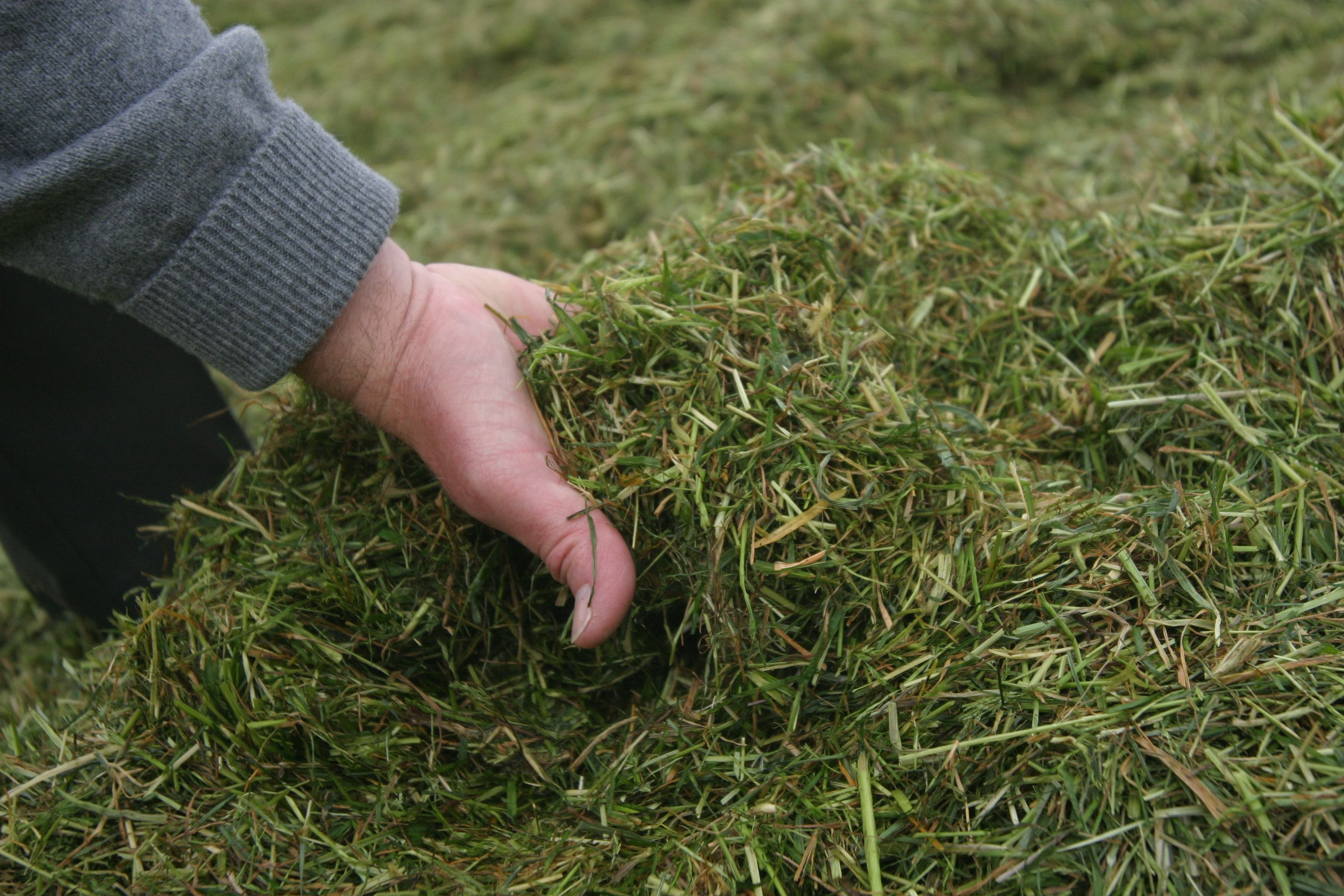 Telugu Agri News 2020-Silage Grass Season Is In January