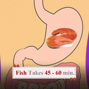 Digestion-Times-Fish