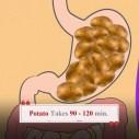 Digestion-Times-Potato
