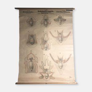 Planche de zoologie
