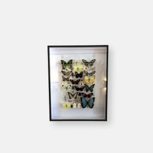Composition d'insectes par E. Bouteille