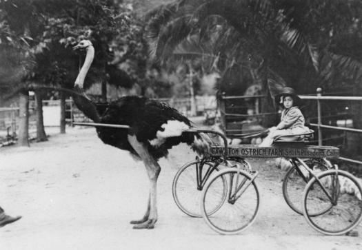 Ostrich Farm Lofts
