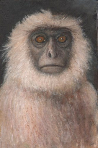 Richard Meyer - White Monkey