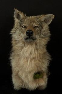 Katie Innamorato - Coyote Terrarium